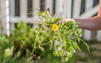 Forget nasty chemicals: Here are 7 ways to kill weeds naturally