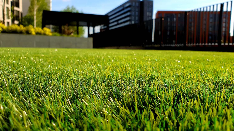 front yard lawn
