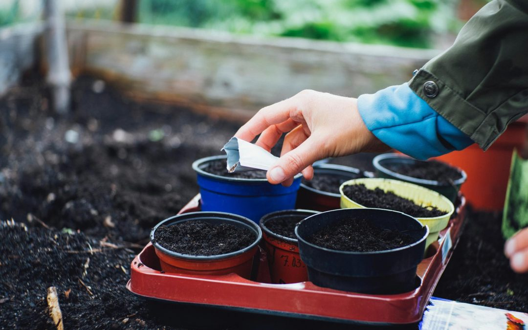 Never fear, first-time vegetable gardeners. Think small and get growing