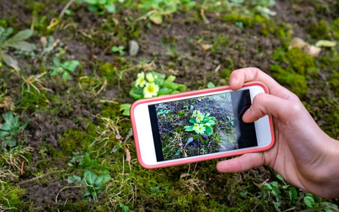 Quick Tip of the Month: Identify plant varieties with garden apps