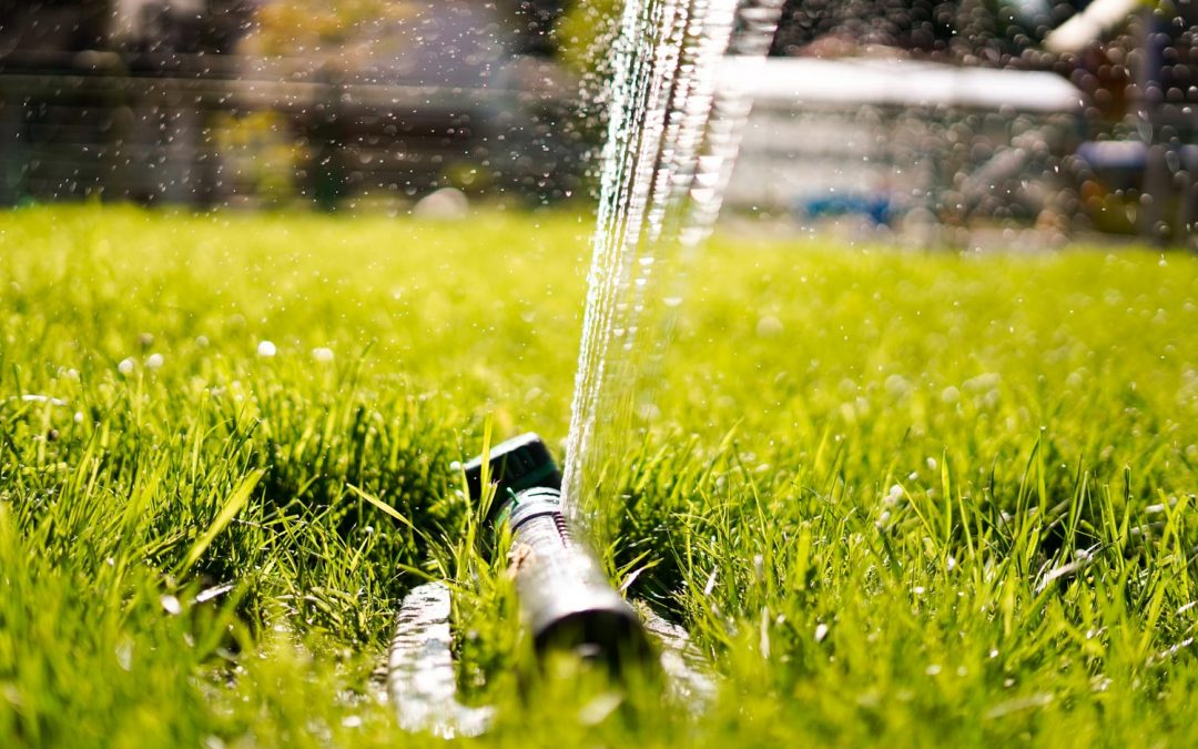 9 tips for keeping yard green without wasting water