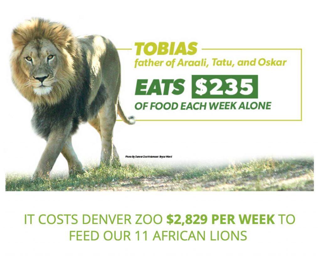 lion zootrition