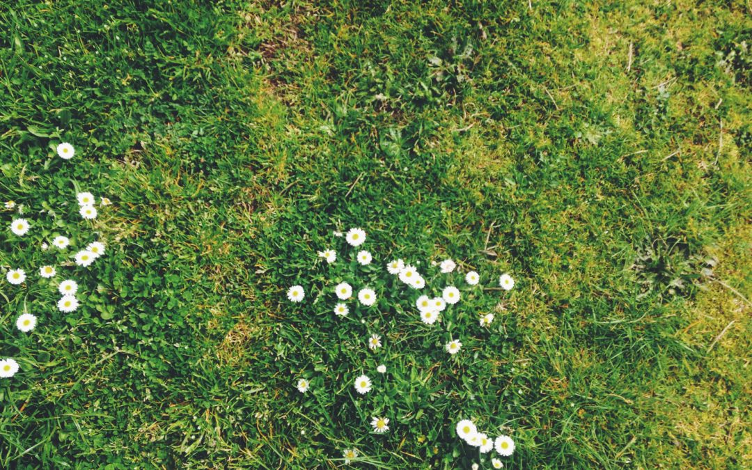 Quick Tip of the Month | Killing unwanted grass