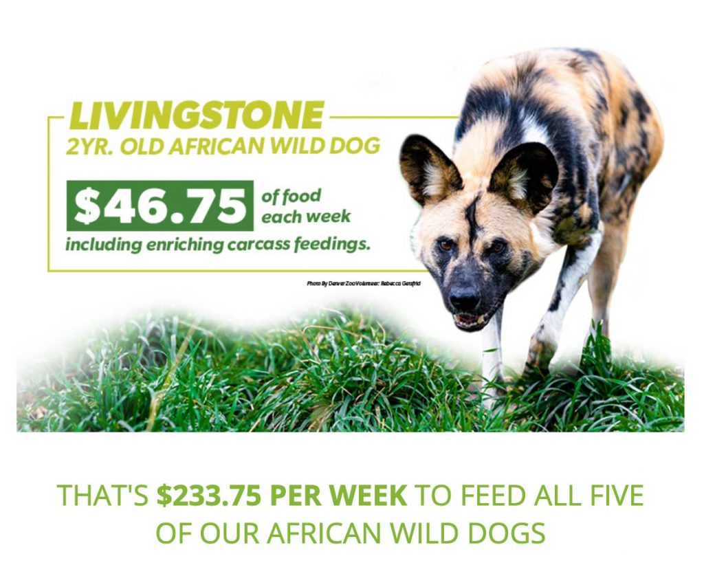 wild dogs zootrition