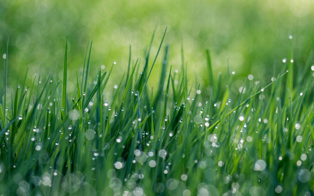 Quick Tip of the Month: Now is the time to spruce up your lawn