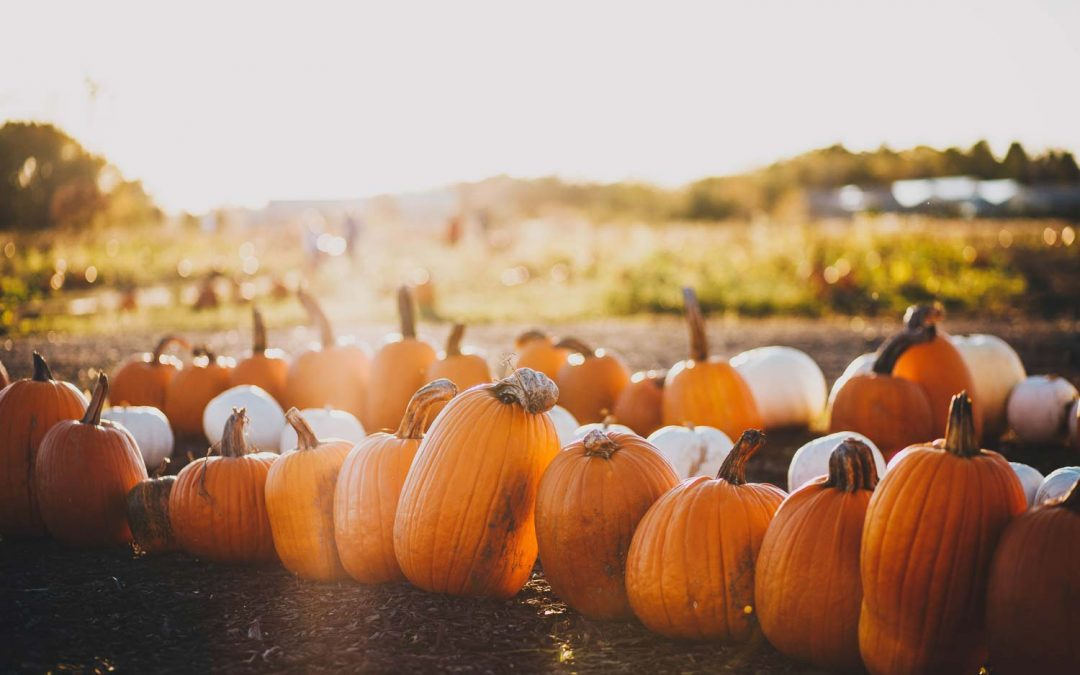 Time for picking out pumpkins and conquering corn mazes
